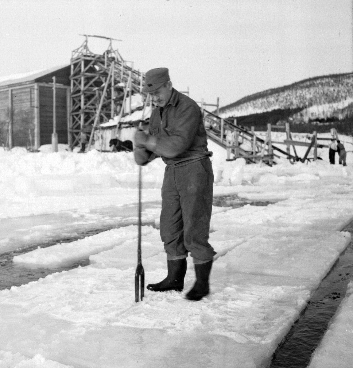 Isskjæring på Møkkelandsvannet, 1954. Johnny Jensen, Møkkeland, arbeider. Isen skulle brukes hos Bertheus Nilsen i byen.
