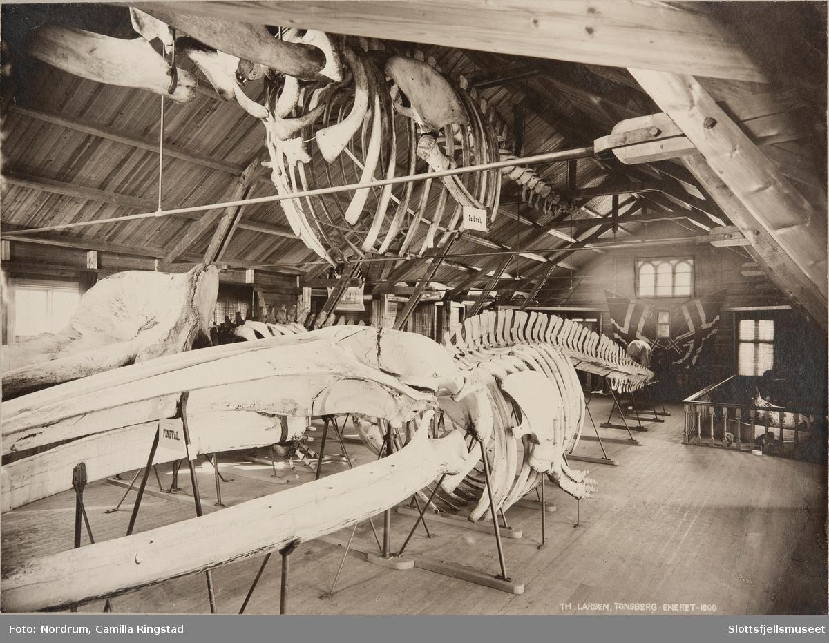 Tønsberg Museum - Arktisk avdeling
