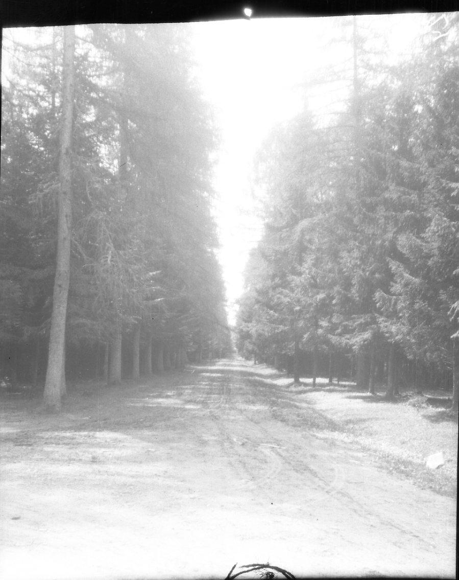 En rak grusväg kantad av granskog.