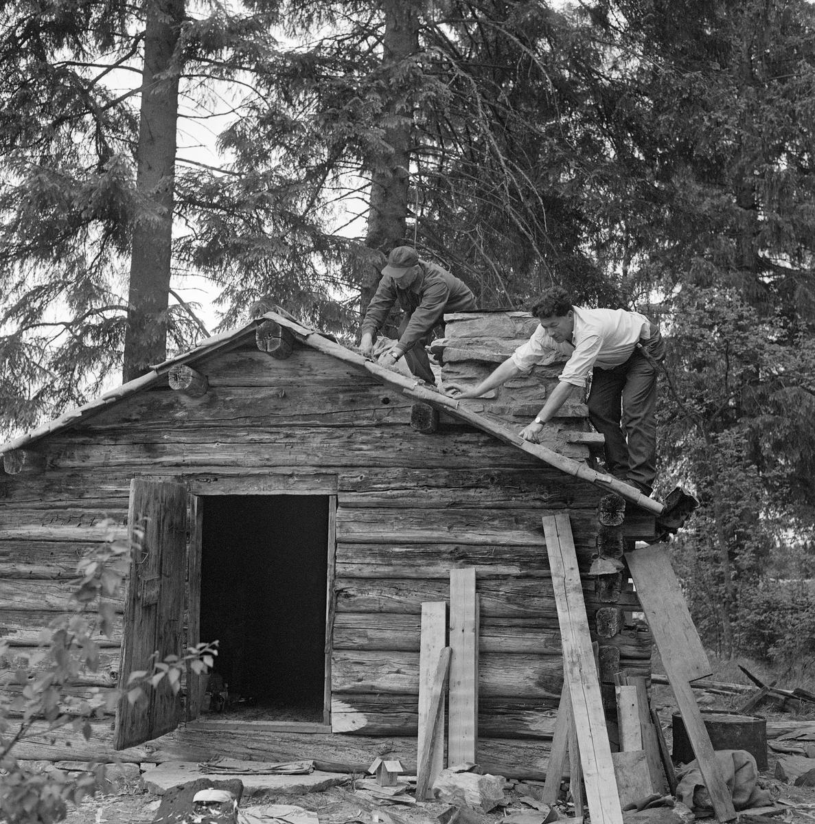 Fra gjenreisinga av Kvannstranddamkoia fra Trysil på Norsk Skogbruksmuseum sommeren 1971. Dette prosjektet ble initiert av Trygve Aasheim (1893-1975), som var museets kontaktmann i Trysil. Museet hadde på dette tidspunktet bare fem medarbeidere, og ingen av disse hadde handverkerkompetanse eller vaktmesteroppgaver. Arbeidet med å gjenreise Kvannstranddamkoia i friluftsavdelingen på Prestøya ble derfor utført av kontaktmannen og hans venn Jon Galaasen (1922-2002), riktignok med litt murerbistand fra en som kunne dette faget. Her var det sannsynligvis Galaasen (til høyre) som la never på taket. Hvem som sto bøyd på oversida av den samme pipa med lueskyggen over ansiktet er det vanskeligere å se.   Kvannstranddamkoia er om lag 4,5 meter lang og 3,8 meter bred, og har med andre ord ei grunnflate på 17,5 kvadratmeter. Den har dør i den ene gavlveggen og dør i den andre. Inne i koierommet er det en gråsteinsmurt peis i hjørnet til høyre innenfor døra. Ellers har den veggefaste brisker med spisebord foran langs de indre veggene. Vis a vis peisen finner vi et uvanlig koiemøbel: Ei seng, som skal ha vært innsatt da disponenten i Mölnbacka-Trysil, Axel Mörner, skulle komme på overnattingsbesøk. Fotografier som ble tatt før Kvannstranddamkoia ble demontert for flytting til museet viser at den da hadde bølgeblikktak, muligens med et gammelt stikketak under. På museet ble den gjenreist med tretak, lagd av impregnerte halvkløvninger. Vi vet ikke bakgrunnen for at dette valget ble gjort, og det er usikkert om det fantes noen tradisjon for slike kavletak i Trysil. Bølgeblikktekket koia hadde hatt de siste åra den sto ved Kvannstranddammen ble sannsynligvis oppfattet som et nyere element, som harmonerte dårlig med en oppfatning om at huset var bygd på midten av 1880-tallet, eller kanskje til og med 10-15 år tidligere. På denne bakgrunnen kan karene ha følt at det var riktigst å gi koia et tretak da den ble gjenreist på museet. Langs takets ytterkanter ble det lagt never, som ofte bl