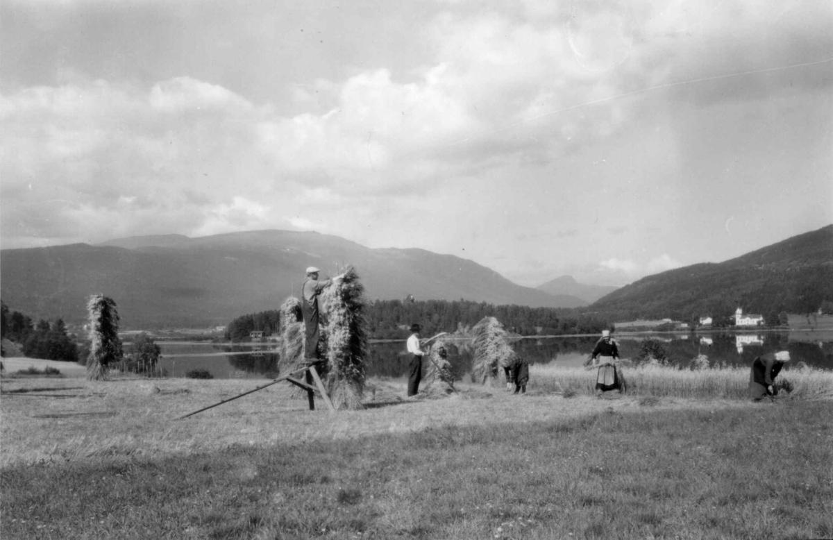 Skurdonn, Krødsherad, Buskerud, med Olberg kirke, Noresund i bakgrunnen. Kvinner og menn i arbeid med å skjære korn og sette opp kornstaur.