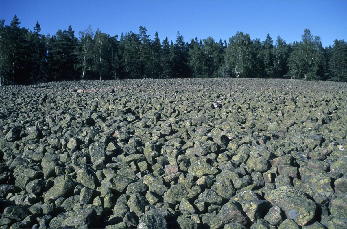 Naturreservatet Kapplasse med klapperstensfält och fornstrandvallar, Marskär, Sikhjälma, Hållnäs socken, Uppsala, 2000
