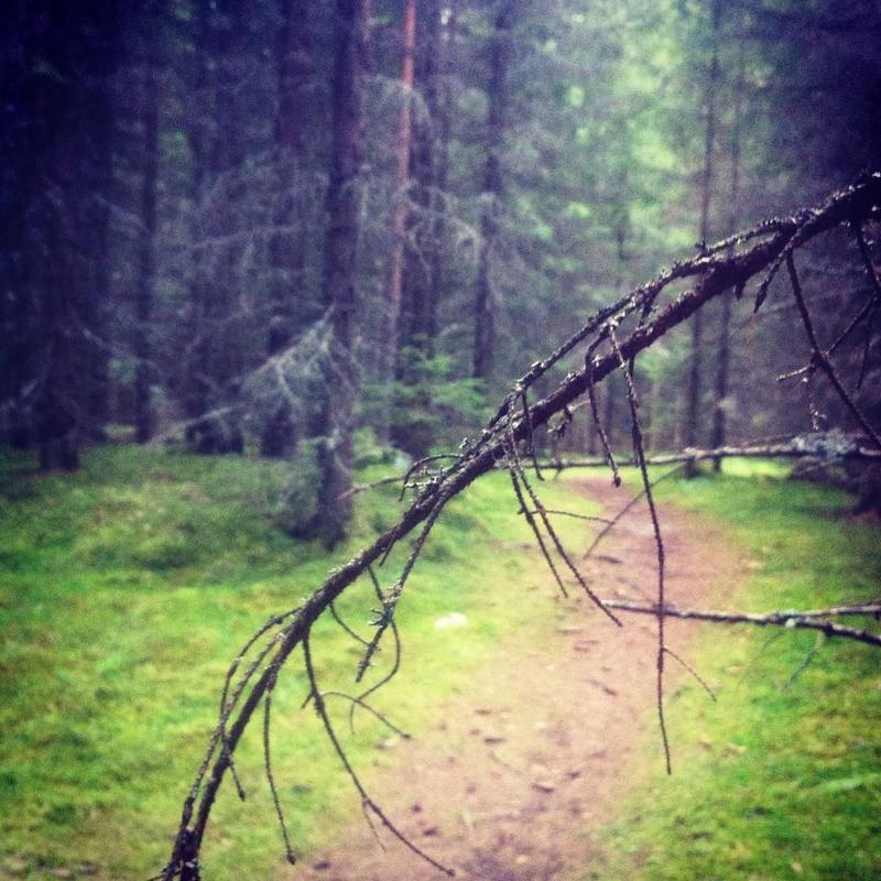 """Augustvinner i fotokonkurransen """"Det fantastiske treet""""."""
