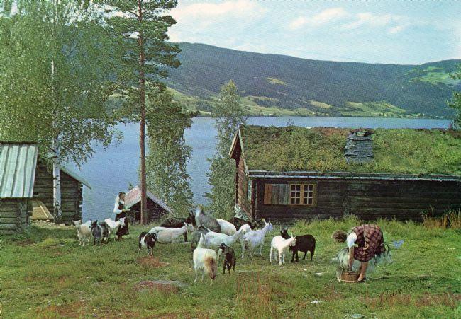 HUSMANNSPLASSEN: På 1950-talet vart det òg flytt ein heil husmannsplass frå Øvre Frigstad i Vestre Slidre til museet. I friluftsmuseet har det vore budeier på sommarjobb sidan 1960-talet.