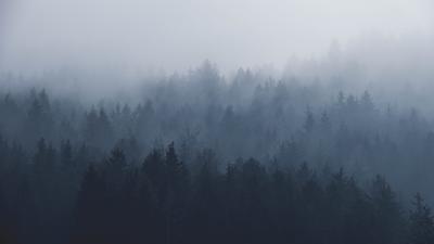 skog_i_take.jpg
