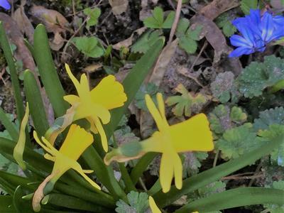 blomster_amot_kirke.jpg