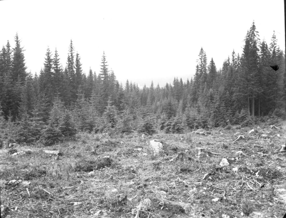 Skog, sommer