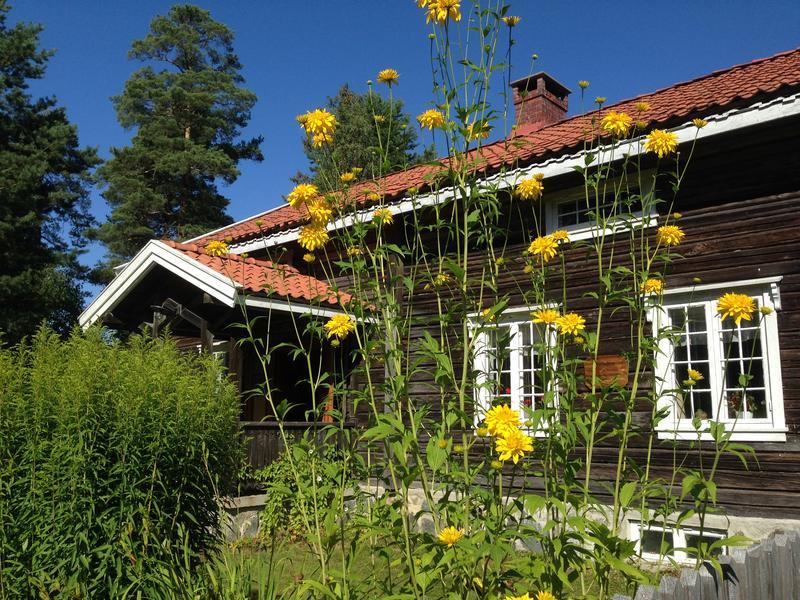 Blomstene foran Storbråtenhuset - liggende (Foto/Photo)