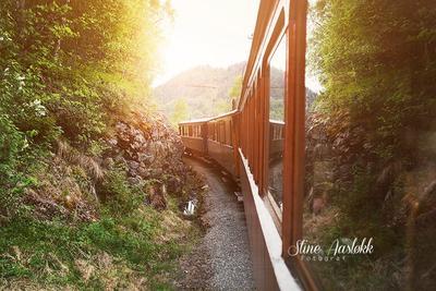 En reise med Thamshavnbanen er en reise gjennom et variert landskap. En naturopplevelse i seg selv.