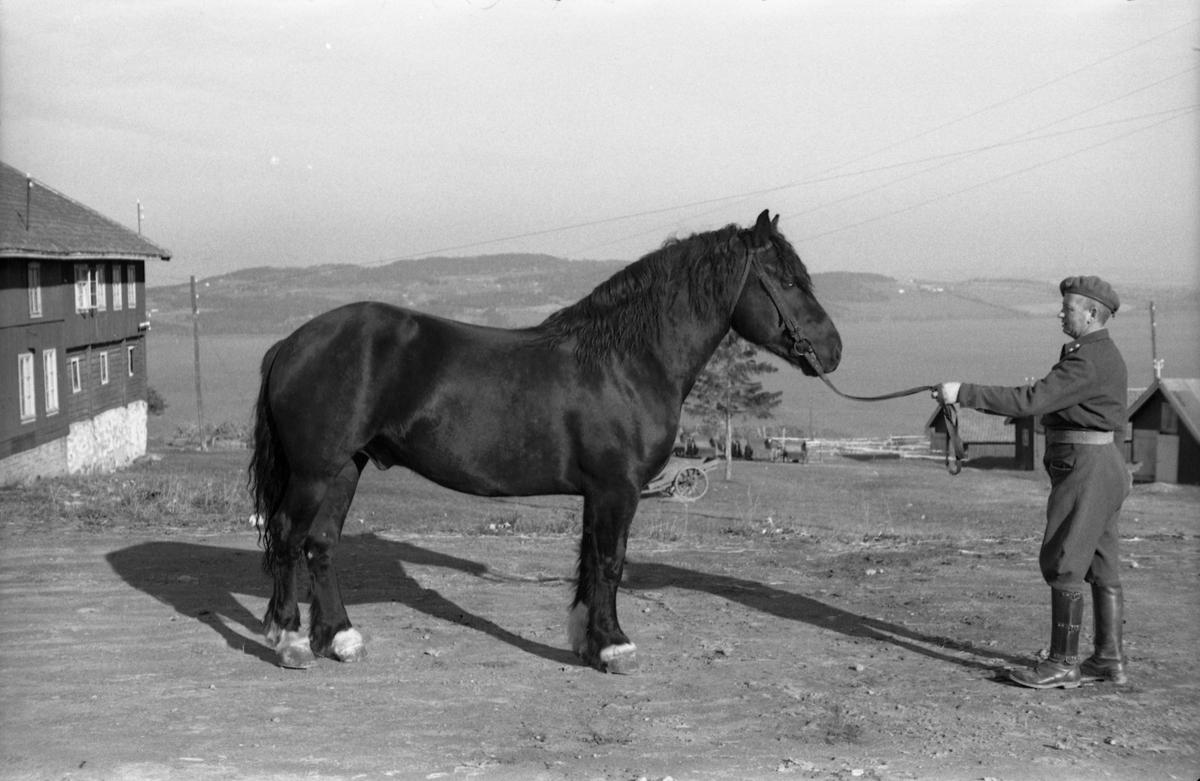 Løytnant Ottar Markeng mønstrer hest ved Hærens Hesteskole på Starum. Fem bilder.
