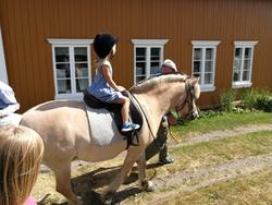 Middelalder hest (Foto/Photo)