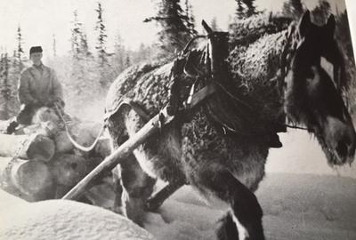 Skogsarbeid_med_hest.jpg